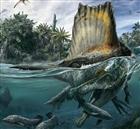 View PrehistoricLifeRocks's Profile