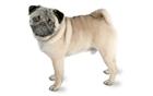 View Omega_Pug's Profile