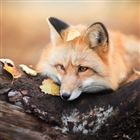 FireFox241's avatar