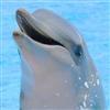 TransPacific's avatar