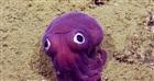 LumpDumper's avatar