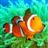 Clownfish's avatar