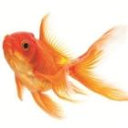 View PeterFish79's Profile