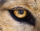View wolfeye68's Profile