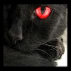 View blackcatgamingyt's Profile
