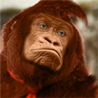 View Donkey_Kong's Profile