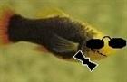 View doubleOfish's Profile