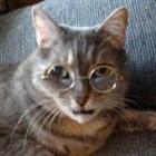 View Professor_Meow's Profile