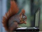 PetSquirrel's avatar