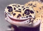 strongecko15's avatar