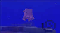 Dumbo Octopus Showcase