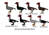 Muscovy Duck Varitions